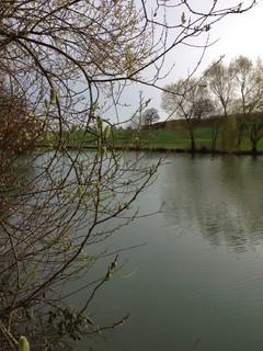 Lake in january